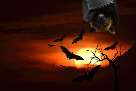 Horror in Halloween night with flying bats and scary head over sunset silhouette