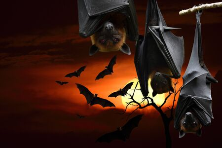 scary halloween night party with red eyes hanging bat head and flying over darkness sunset, horror festival Stockfoto