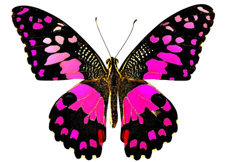 Sweet Pink Lime Butterfly Stock fotó