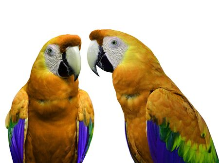 Orange macaw parrot birds