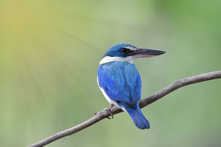 Beautiful blue bird perching on thin branch against luminant sun rays, amazed animal in grace environment