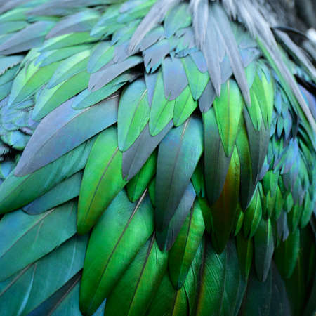 Green bird feathers with reflection of light and colors brightness in grace texture and nice background