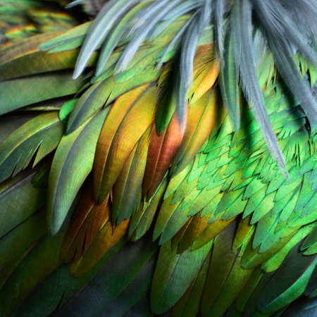 Shiny gold bronze and velvet jade of bird feathers in amazing texture, fine nature background Stock Photo - 152427990