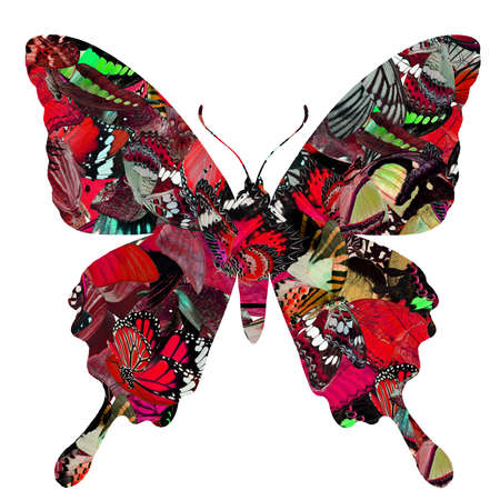 Mix butterflies pile up together and cut out of swallow tail butterfly shape in red tone, fascinated butterfly art on white background