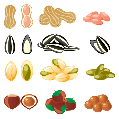set of  images of nuts and seeds Illustration