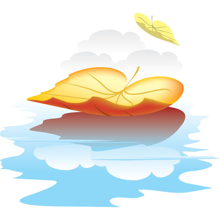 quercus: autumn leaf is reflected in the water