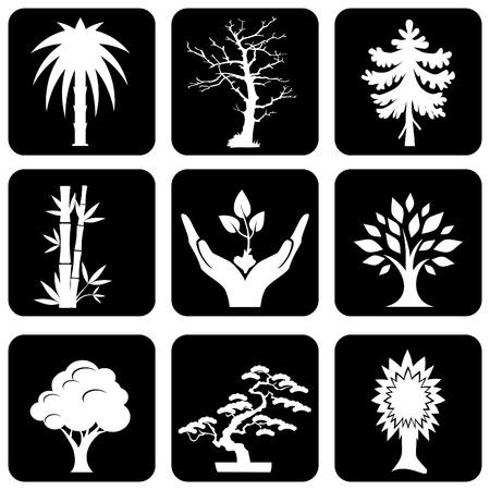 deciduous tree: conjunto de iconos de silueta de �rboles y plantas