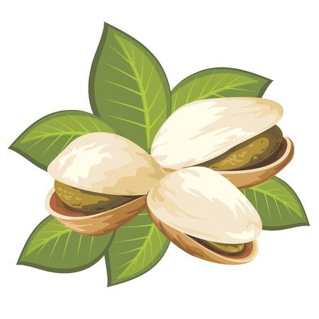 orzechów: obraz z pistacjami z liśćmi