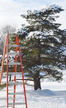 Perspective can be altered - ladder in front of tree in Winter Banco de Imagens