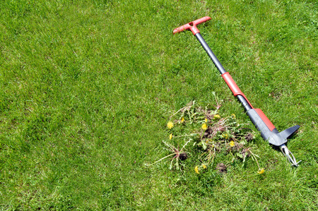Weeds thou hast been pulled