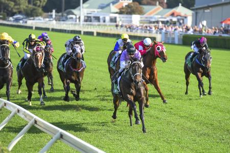 Gruppe von Pferden, die für die Ziellinie aufladen Standard-Bild