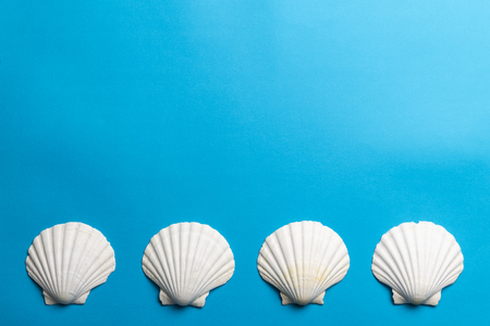 Close up photo of white shells isolated on blue background, copy space