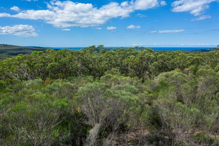 Aerial view of forest and ocean at Ku-ring-gai Chase National Park, New South Wales, Australia 스톡 콘텐츠