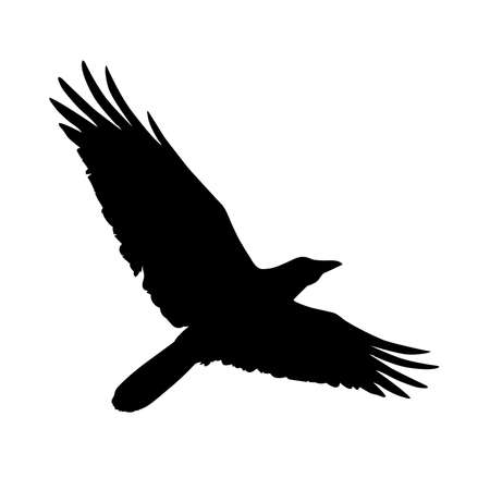 Silhouette of a flying crow. Vector illustration of raven silhouette