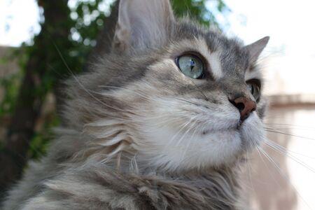 an innocent cat Stock fotó