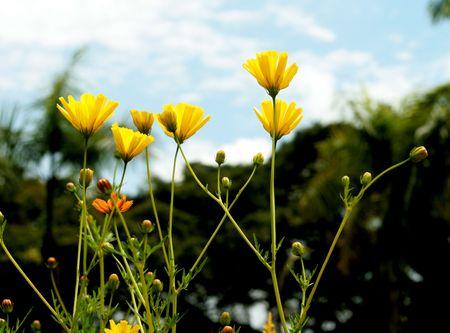 basking: basking yellow flowers Stock Photo