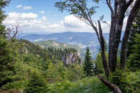 The forest in the national park Mala Fatra, Slovakia