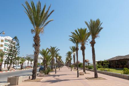Palm-tree lined promenade with lampposts Yasmine Hammamet, Tunisia Фото со стока