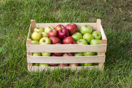 Golden Delicious, Gala and Granny Smith apples in a farmers market crate, Serbia