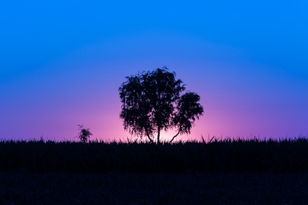 Magical magenta-purple-blue sunrise with a single tree in Serbia 写真素材