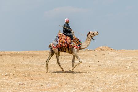 Giza, Egypt - April 19, 2019: A locak man rides a camel at Giza