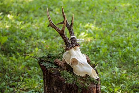 Detail view of the deer skull profile