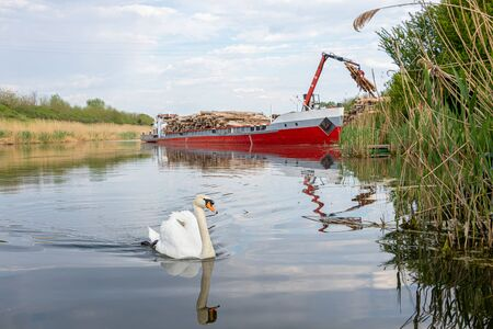 Destruction of the swans 'natural habitat. Destruction of nature unloading timber logs from a ship by crane at the Danube Tisa Danube channel near Novi Sad, Serbia.