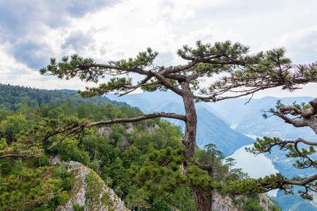Tara mountain, National park in Serbia