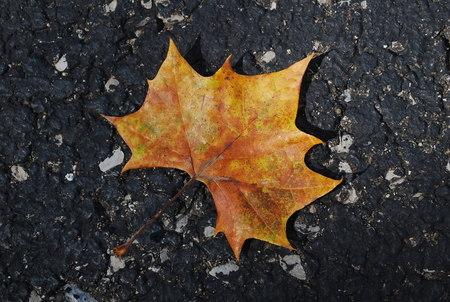 Lonely Leaf 版權商用圖片