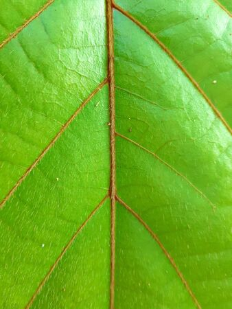 Beautiful close up green leaf, with a textured background, use our space for character design or photo backdrops.
