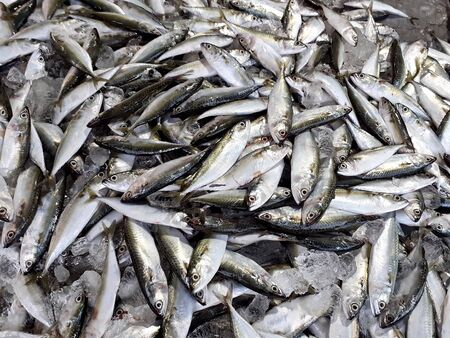 Fresh fish at the market, mackerel, used as food sold and new. Thailand