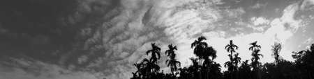 Beautiful vintage photo concept of panorama nature, with sunlight on the black sky and white clouds among garden natural area in countryside, Thailand Reklamní fotografie