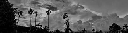 Beautiful vintage photo concept of panorama nature, with black betel nut trees, the sky and clouds mountains forest natural area in countryside, Thailand.