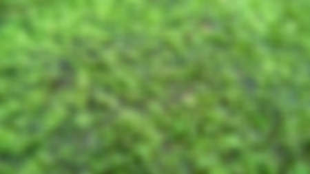 Natural fresh green grassland in the forest, with close up of peeling of texture, abstract on blurred background concept.