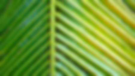 Texture background of coconut leave, with the beam sunlight affect tone, abstract soft blurred and soft focus concept.