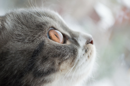 muzzle cat looking out the window close-up Stock Photo