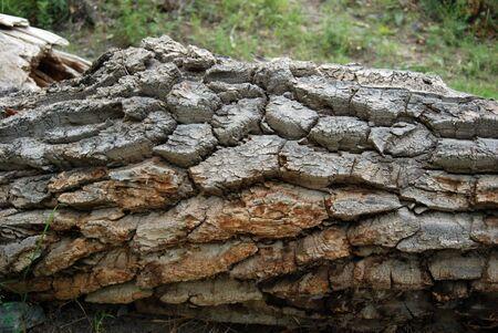 exasperate: barc of old broken tree