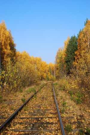 forest railroad: railroad track winding through forest