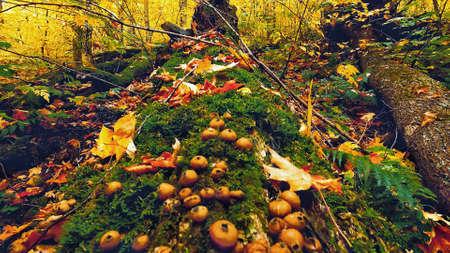Autumn color details. Foliage background. Autumn backgrounds Zdjęcie Seryjne