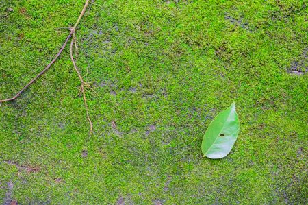 mosses: Walkway covering with mosses in a park