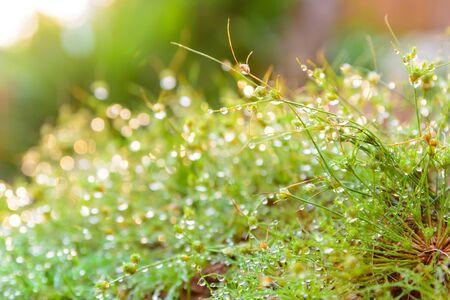 Grasses mit warmem Sonnenlicht