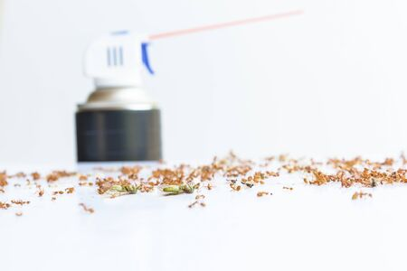 insecticide: Dead ants with insecticide Stock Photo