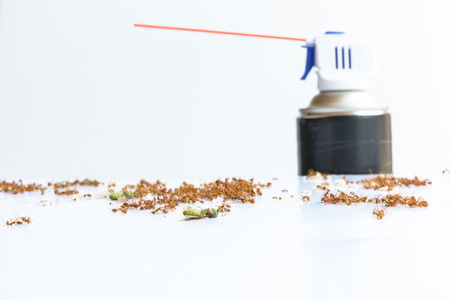 insecticide: Dead ants and spray insecticide Stock Photo