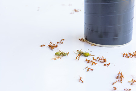 insecticide: dead ants and insecticide Stock Photo