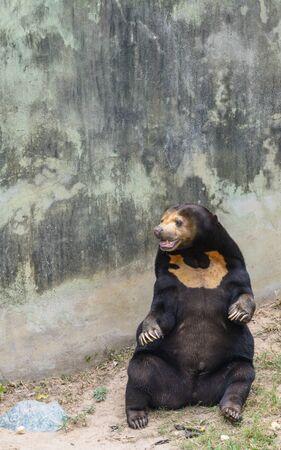 Pretty brown bear in a  park