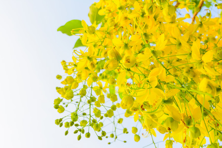 yellow blossom: Yellow blossom of flora Stock Photo