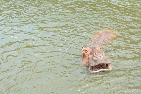 sympathize: Animal swimming in a pool
