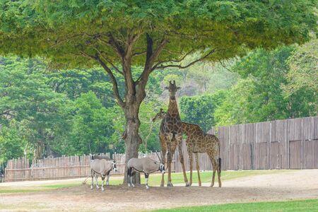 pity: Giraffe standing under a tree