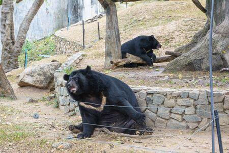 Bear family in a park
