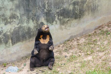 Pretty bear sit in a park Stock Photo